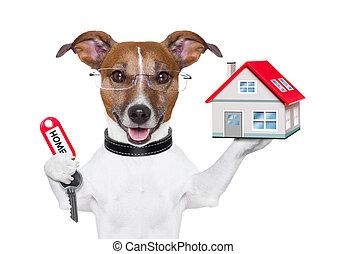 ägare, hem, hund