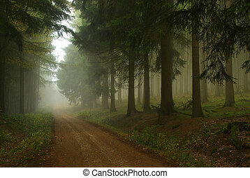 18, dimma, skog