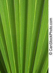 abstrakt, palm