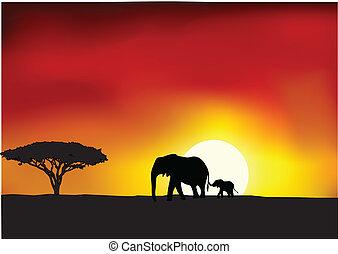 afrika, solnedgång