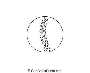 anatomi, rygg, ryggrad, mänsklig, illustration., vektor, icon.