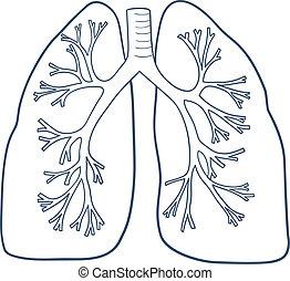 anatomisk, white., lungan, isolerat