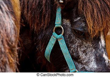 ansikte, häst