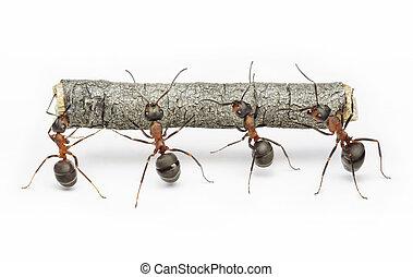 arbete, myror, teamwork, logga, lag