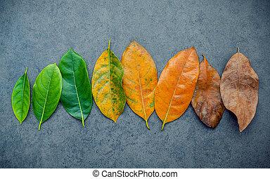 bakgrund., fruktträd, säsongbetonad, ålder, bladen, avskrift, space., färgrik, sten, lägga, lägenhet, jack, olik, begrepp, mörk, åldras