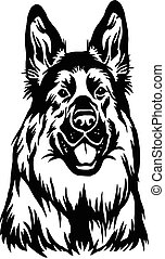 bakgrund, huvud, -, illustration, vit, vektor, hund, fåraherde, isolerat, tysk