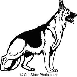 bakgrund, illustration, vit, pose-, vektor, hund, fåraherde, isolerat, tysk