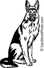 bakgrund, illustration, vit, pose-, vektor, hund, sittande, fåraherde, isolerat, tysk