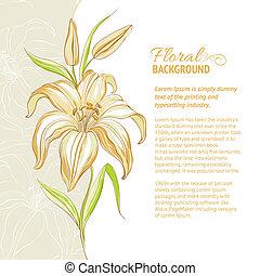 bakgrund., vektor, lilja, blomma, illustration