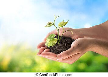 begrepp, lantbruk, litet, växt