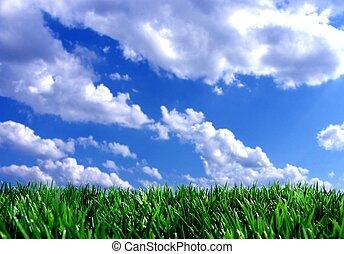 blå, frisk, sky, grön, gras