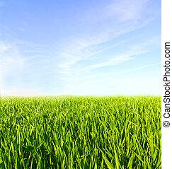 blå, skyn, äng, sky, grönt gräs