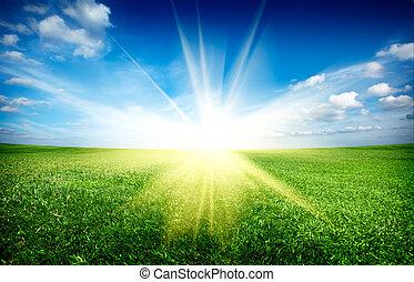 blå, sol, sky, gröna gärde, solnedgång, under, frisk, gräs