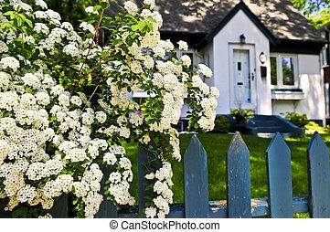 blå, vita blommar, staket