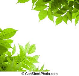 blåregn, synvinkel, över, -, sida, grön fond, blad, vit, gräns, bladen