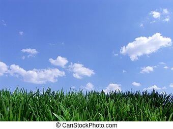 blåttsky, gräs, grön