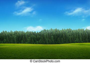 blåttsky, ung, landskap, grönt skog