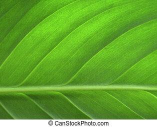 blad, närbild, grön