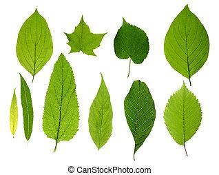 bladen, grön, isolerat