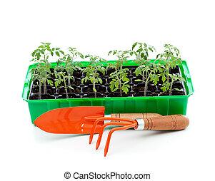 bricka, groning, trädgårdsarbete verktyg, plantor