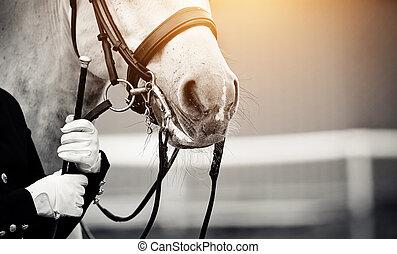 bridle., häst, ryttartävling sport, näsa, sport.