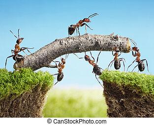 bro, teamwork, konstruerande, myror, lag