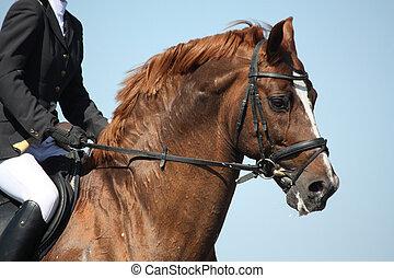 brun bygelhäst, visa, under, stående, sport