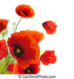 dekoration, -, blomningen, vallmoer, blommig, hörna, gräns, design