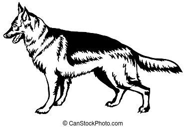 dekorativ, stående, fåraherde, tysk, hund, illustration, vektor, stående