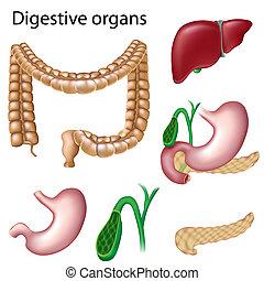 digestiv organen, isolerat