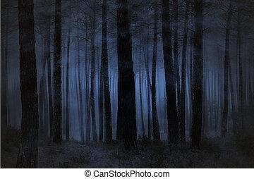 dimmig, skog