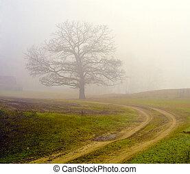 dimmig, träd., fält