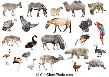 djuren