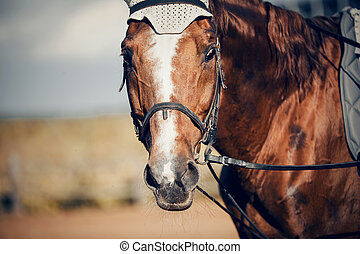 dressyr, sporter färgar, horse., stående, ung, röd, bridle., häst