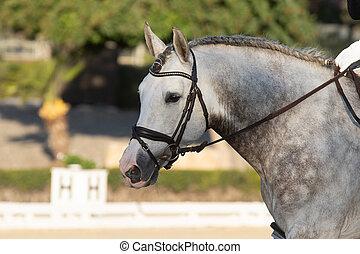 dressyr, stående, häst, ansikte, spansk, konkurrens