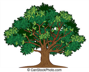 ek, vektor, träd