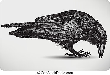 fågel, illustration., vektor, svart, hand-drawing., korp