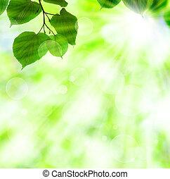 fjäder, bladen, sol, grön, stråla