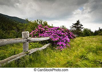 fjäll, rhododendron, blomma, staket, natur, trä, parkera, mellanrum, tillstånd, brun häst med vita stänk, utomhus, förskärarkniven, blomstrar