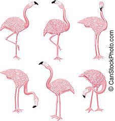 flamingor, rosa