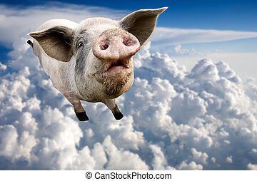 flygning, gris