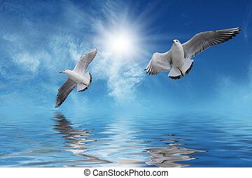 flygning, vita sol, fåglar