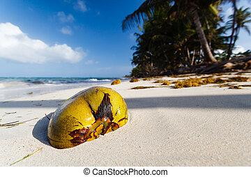 folktom, kokosnöt, strand