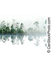 forest., uppe, isolerat, yta, morgon, lake., taiga, dimma, water., stilla, nedåt