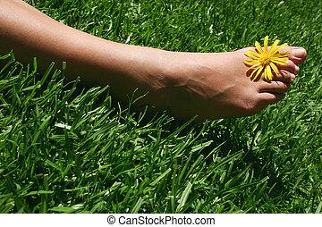 fot, gräs, 4