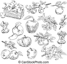 freehand, teckning, äpplen