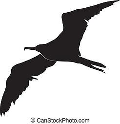 fregatt fågel