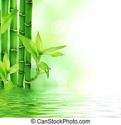 frisk, vacker, bambu