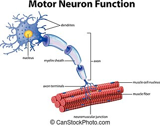 funktion, neuron, motor, vektor