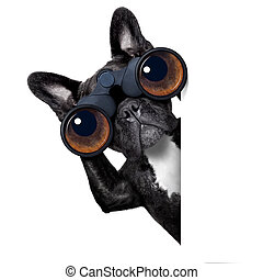 genom, hund, kikare, se